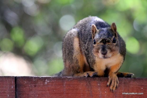 Squirrels 005