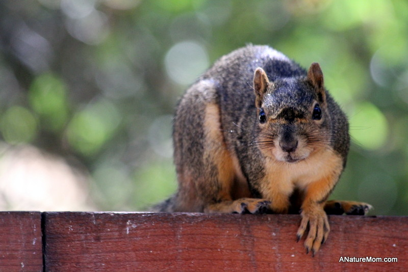 Squirrels 005