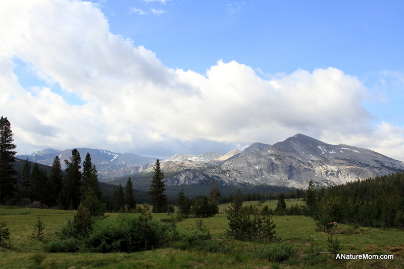 Yosemite Camping July 003