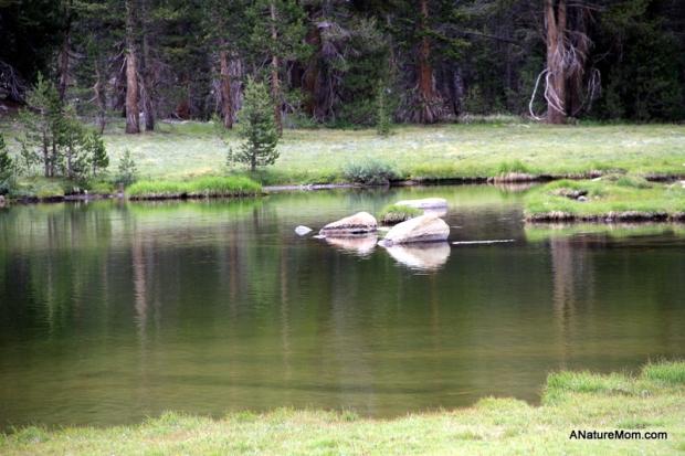 Yosemite Camping July 010