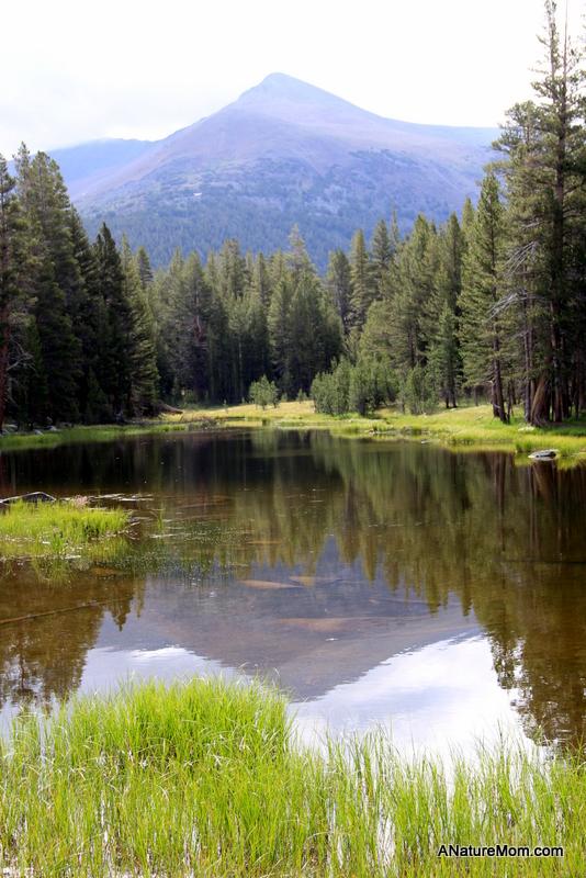 Yosemite Camping July 012