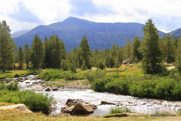 Yosemite Camping July 017