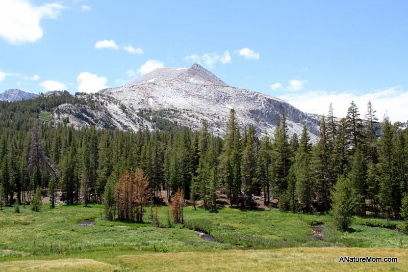Yosemite Camping July 035