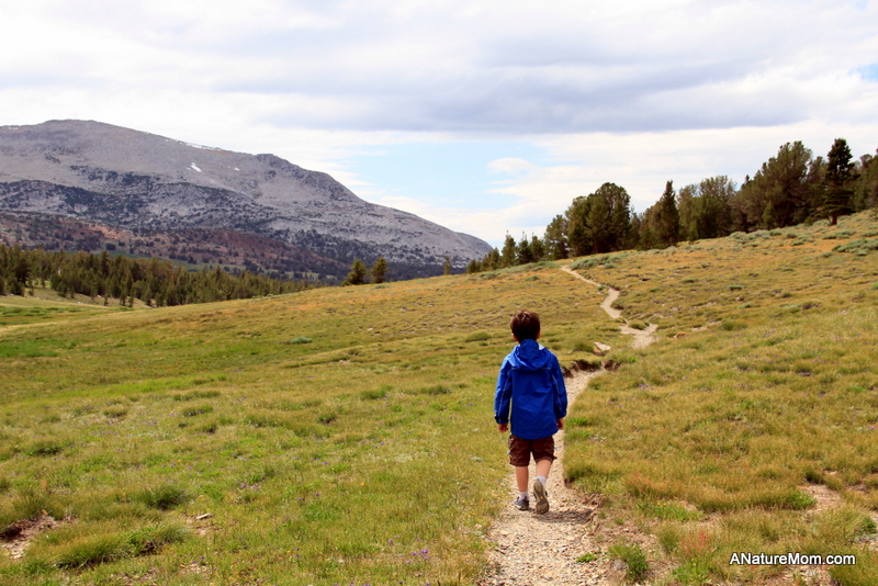 Yosemite Camping July 088