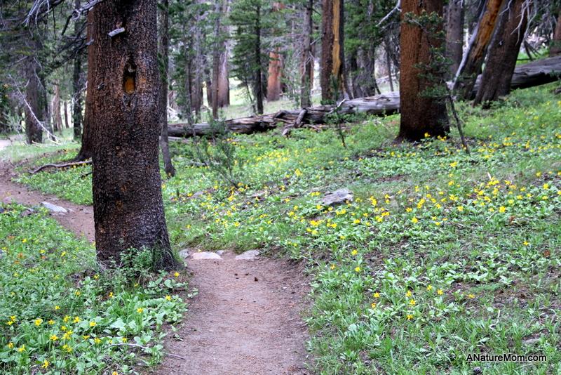 Yosemite Camping July 105