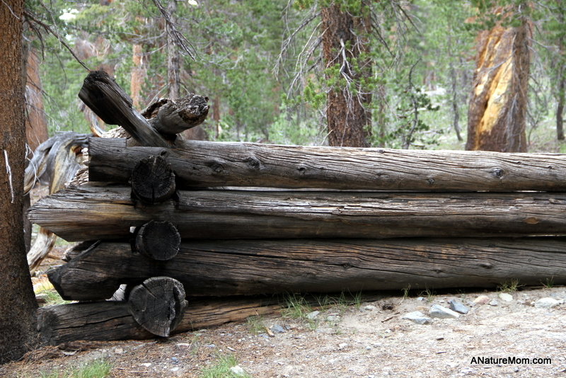 Yosemite Camping July 117