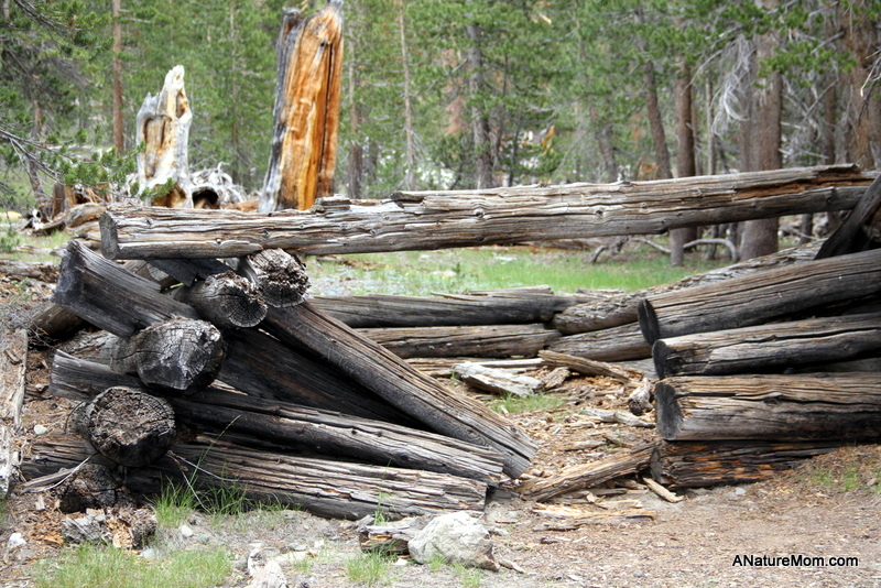 Yosemite Camping July 119